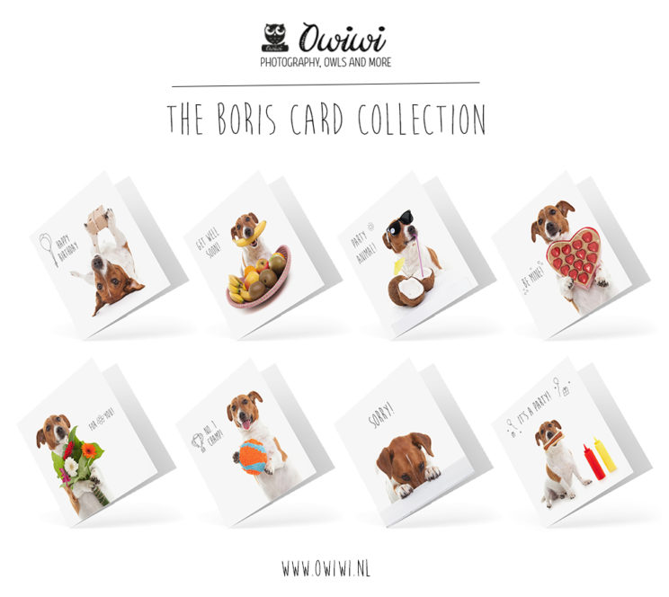 Jack Russell Boris Card Collection