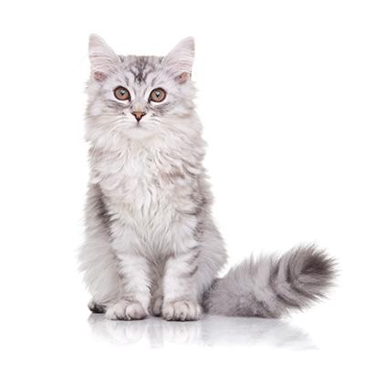 kitten casting